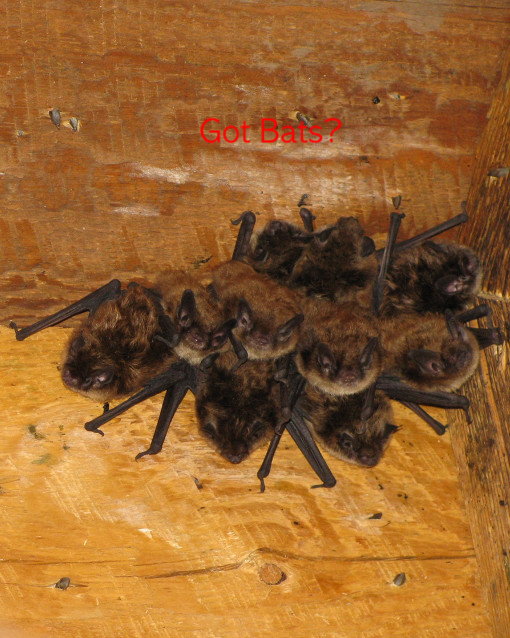 Bat Control Bat Inspection