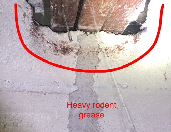 Heavy Rodent Grease