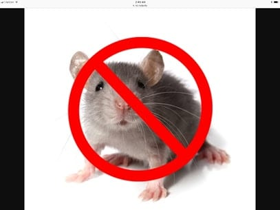 Mouse Removal Greenwich