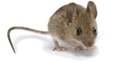 GOT MICE IN YOUR HOUSE?