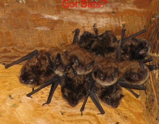 With Bat Season In Full Swing