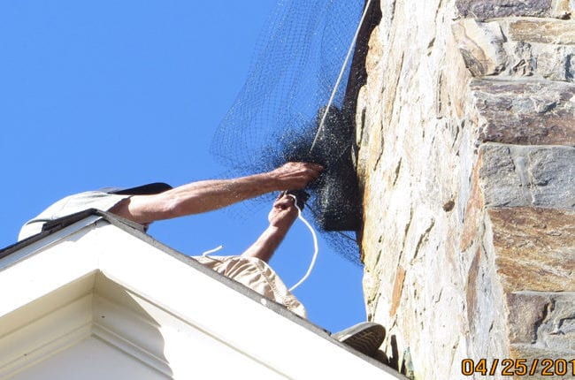 Flying Squirrel Removal Greenwich - Photo Gallery