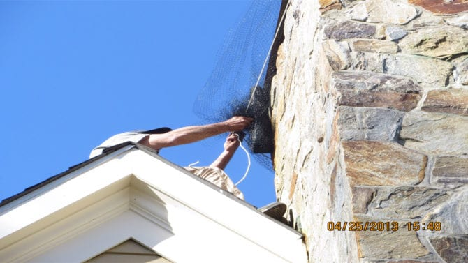 Flying Squirrel Removal Greenwich