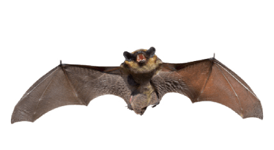 GOT BATS IN YOUR HOUSE?